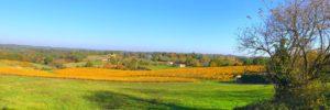 Bel Air de Rosette - Vignoble aux couleurs automne