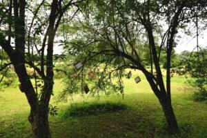 Bel Air de Rosette - Enigme Eden et Sens